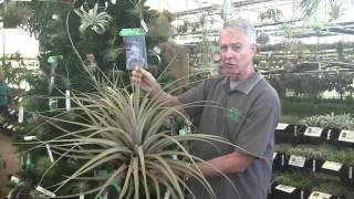 Paul Isley - Jerry Robinson - Rainforest Flora - Hybrids / Xmas Sale