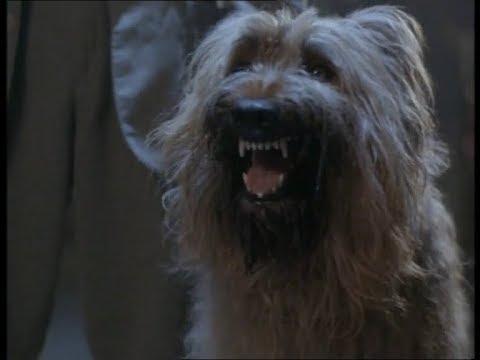 Chuck Norris Top Dog