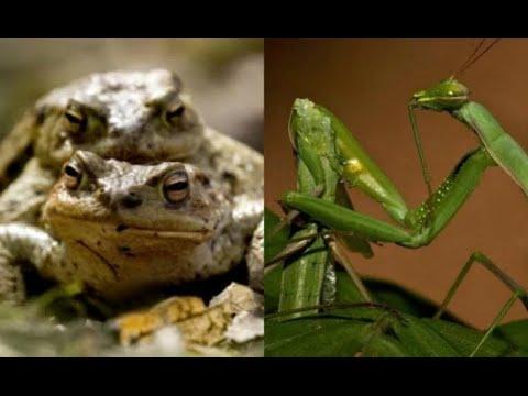 Top 10 - Sexo Extraño Entre Animales - videos de animales y documentales
