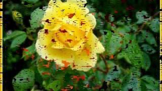 Salvatore Adamo  Quand Les Roses
