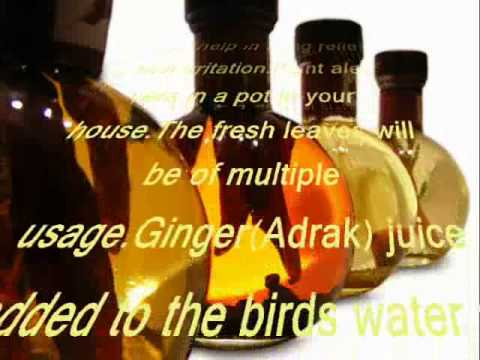 free-ayurvedic-herbal-home-treatment-and-care-of-birds