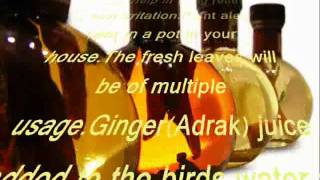 Free Ayurvedic herbal home treatment and care of birds
