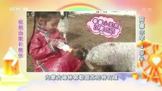 [我们在一起]给小羊羔喂奶| CCTV少儿