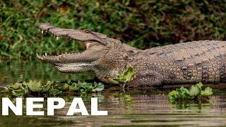 Köşe Bucak Dünya Belgeselleri Nepal Belgeseli Bölüm 04