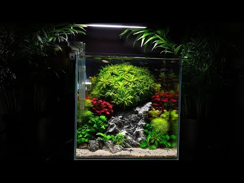 Planted Nano Aquarium with Guppy Fish