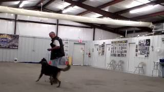 Mike's Obedience Turn At The Mike Diehl Seminar In Okc, 8/2/14