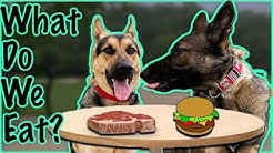 How Much do German Shepherds Eat?