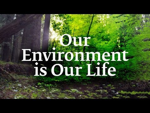 essay on our environment and our lives Get even a better essay we will write a custom essay sample on effects of technology in our lives topics and negative impact on the environment.