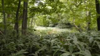 Repeat youtube video Sapporo Botanical Garden Meditation