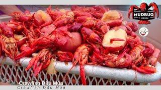 Crawfish Đầu Mùa (đặc sản Louisiana, Mỹ)