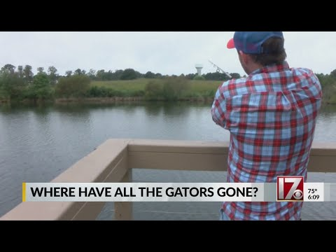 Alligator Hunting Season Coming To A Close In NC Without A Kill