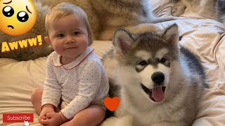 Puppy Wakes Baby Makes Her Cry But Says Sorry (SO CUTE!!)