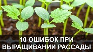 10 Самых Серьезных Ошибок при Выращивании Рассады