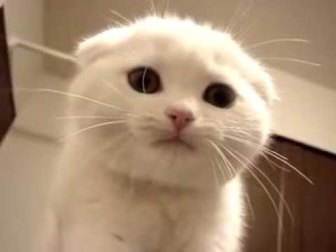 Biały Kotek Fajnie Miauczy Youtube