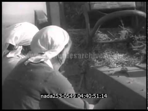 Colonies juives en Palestine