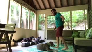 How Do I Teach My Dog To Stay?