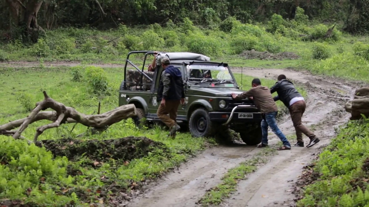 Safari Jeep gets stuck in Kaziranga National Park & Tiger Reserve! Teamwork to the Rescue!