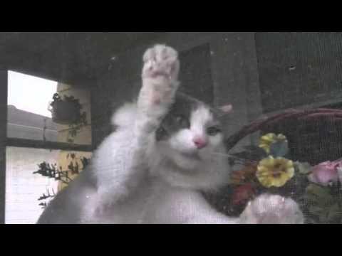 Killer cat attacks mailman