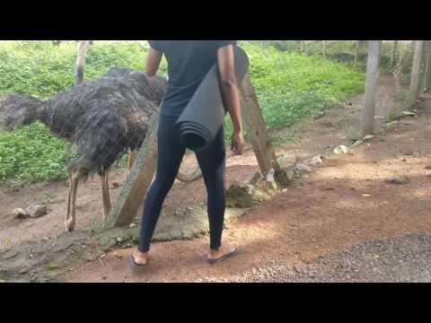 Abuja Park and Zoo 2017