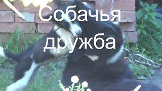 Сабачья дружба Веселые животные Приколы с собаками Не любовь Можно смотреть детям Большая маленькая