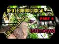 Berburu Punai Burung Uncal Spot Baru  Mp3 - Mp4 Download