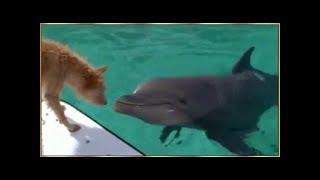 Động vật cứu giúp nhau, con người nên học hỏi!