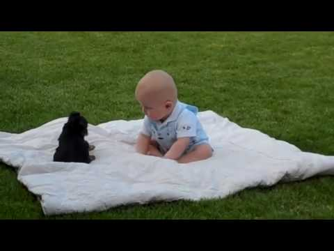 Try Not To Laugh Best Funny Dogs Video, Funny kids Video, Funny Cats Videos Ever