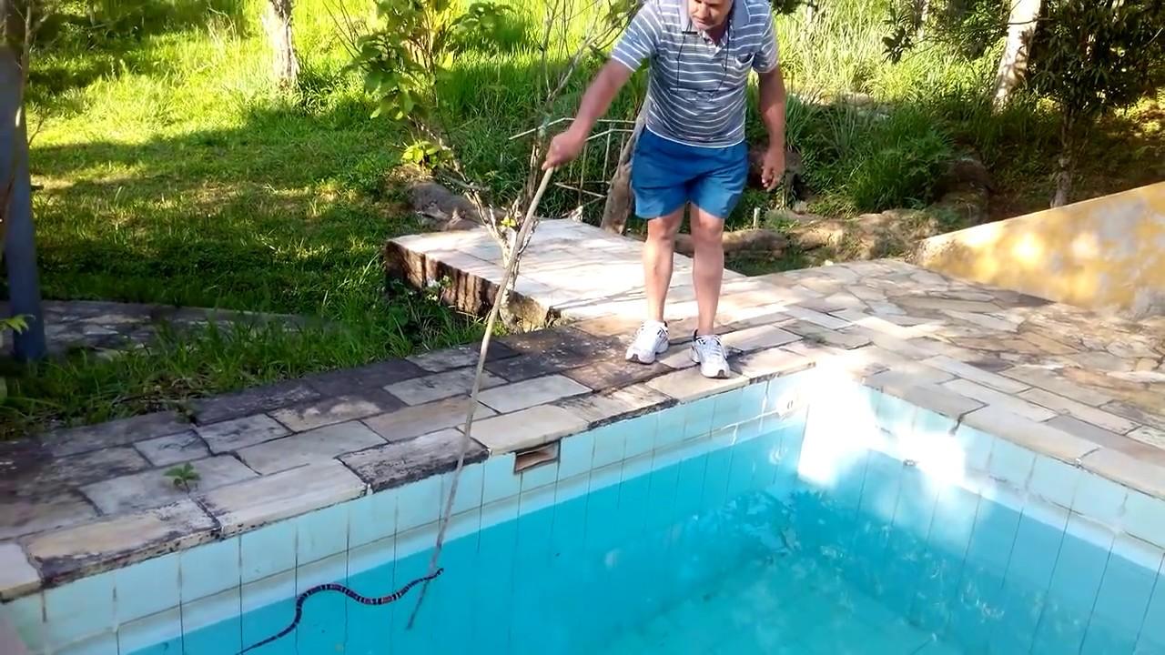 Cobra coral na piscina em dorandia youtube for Caillou na piscina