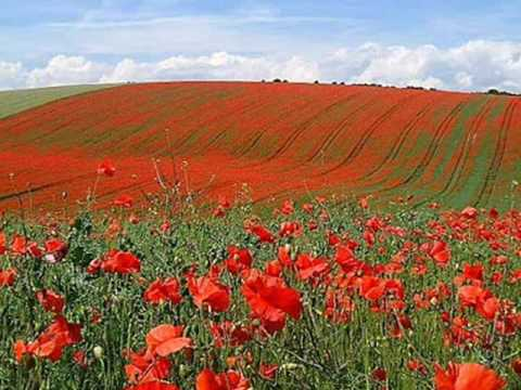 In Flanders Fields by John McCrae (May 1915) - YouTube
