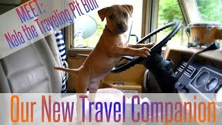 Pit Bull Puppy ~ Training, Traveling, & Just Fitting In ~ RV living