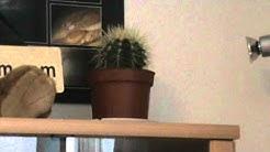 Silmiinpistävä kaktus