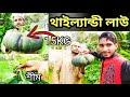 Pumpkin & Beans Plants Sylhet | Misti Kumra Shim chas 2021//Sami's cooking and uk vlogs | Vegetables