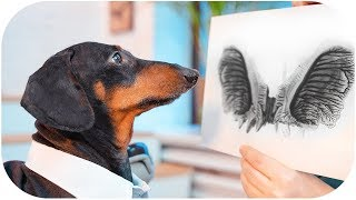 Do you trust your doctor? Funny dachshund dog video!