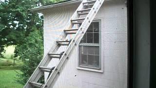 Snake on a Ladder 2013