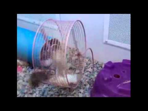 Mice working out