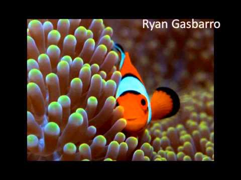 Marine Behavioural Ecology 2015 podcasts