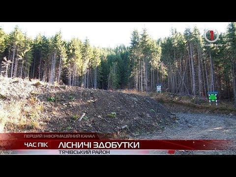 На Закарпатті лісівники проклали лісову дорогу, що з'єднала два високогірні райони
