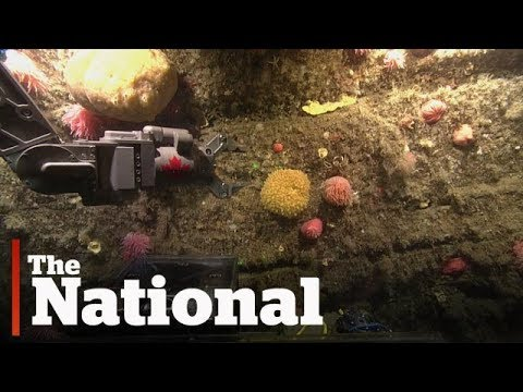 High-tech underwater robot leads new marine expedition in Gulf of St. Lawrence