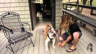 Chest Mount Harness On Dog - Gopro Tip #146