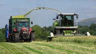 Wholecrop Silage next to the Fells with Claas Jaguar 940, MFs and Valtra - Silage 2018