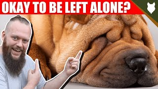 Can a SHAR PEI be left alone?