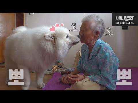 90靷� 雮橃澊彀ゼ 攴闺车頃� 靷鞓堧摐鞕� 頃犽ǜ雼� 銋� Samoyed Dog And Grannie Overcome A 90 Year Age Gap