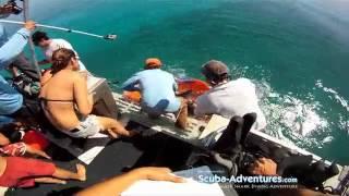 Shark Research Rj Dunlap Marine Conservation Program By Jim Abernethy Scuba Adventures
