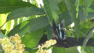 Butterfly @ The RHS Garden Wisley