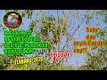 Mikat Burung Di Tengah Hutan Terbaru  Episode Ke   Mp3 - Mp4 Download