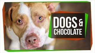 Why Can't Dogs Eat Chocolate? thumbnail