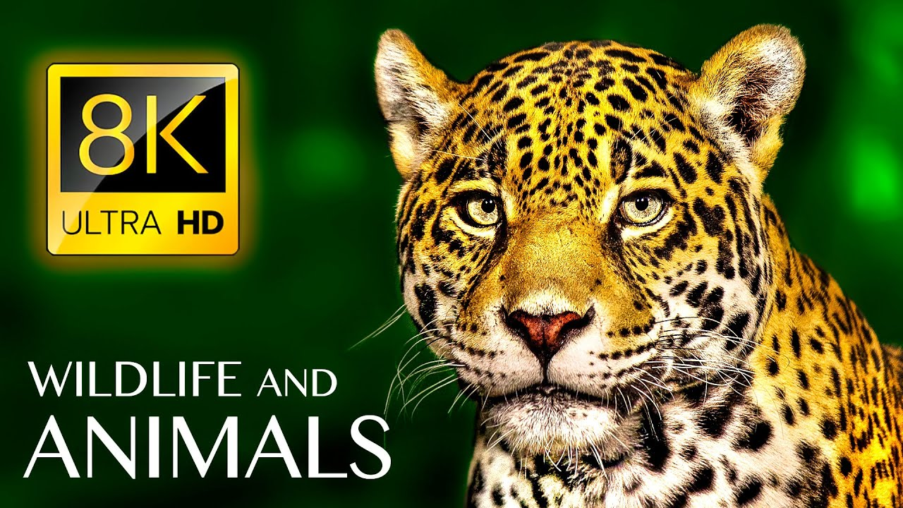 Animals & Wildlife 8K ULTRA HD • Relaxing Music and Nature Sounds 8K TV