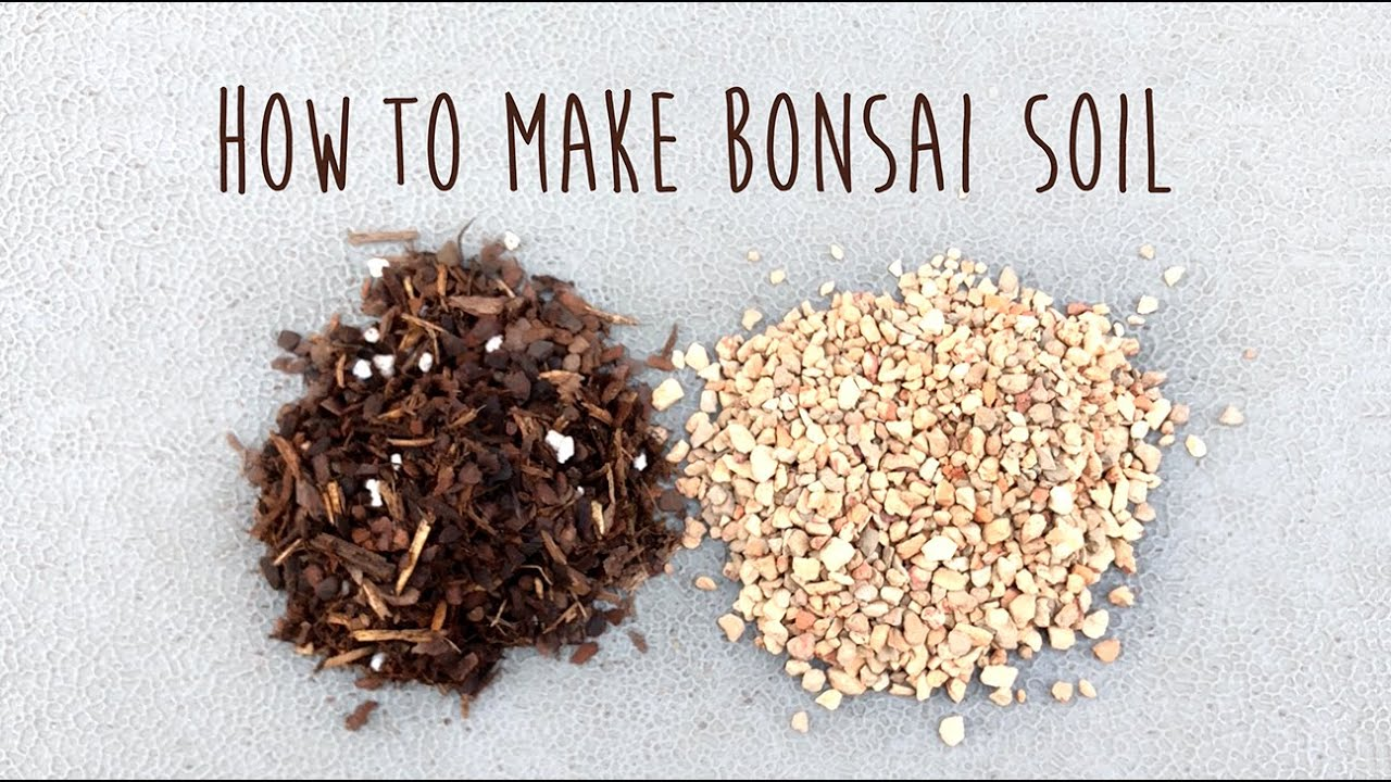 How to make your own bonsai soil for Portulacaria afra by Little Jade Bonsai