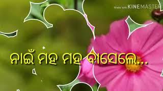 Phul Khuchile Kana Heba Sambalpuri Status Video
