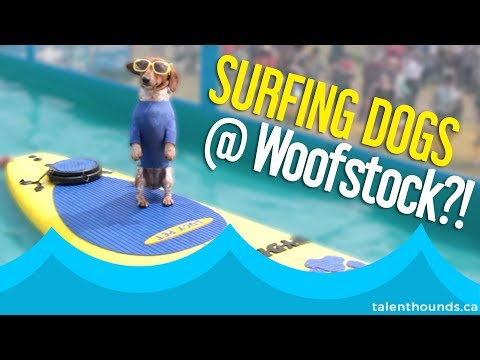 Have You Seen the Amazing Surfing Dogs at Woofstock 2017?